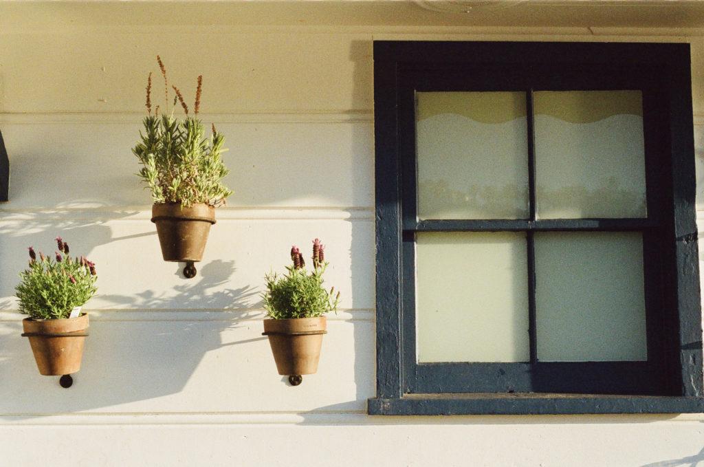 窓と植木鉢